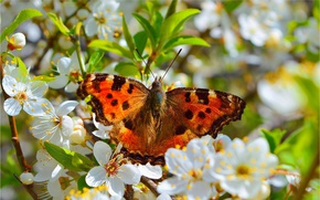 Picture Macro, Spring, Butterfly, Spring, Flowering, Macro, Butterfly, Flowering