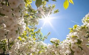 Picture the sky, the sun, flowers, beauty, spring