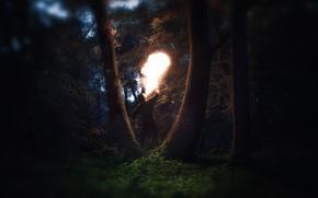 Wallpaper Fire, Man, Forest, Trees