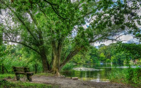 Picture Greens, Tree, Lake