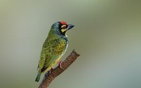 Picture birds, branch, common brotastic