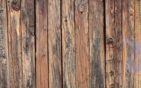 Picture Wood, pattern, Natural, not planed