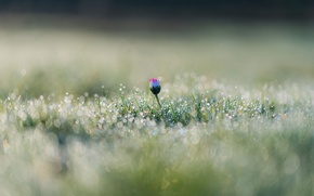 Picture flower, grass, drops, macro, Rosa, glare, bokeh