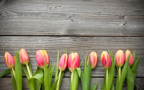 Picture Board, tulips, buds