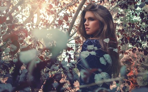 Picture leaves, sponge, bokeh, brown-eyed, Sonia Ortiz