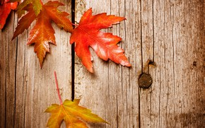 Wallpaper leaves, background, autumn, wood, maple