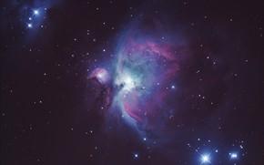 Picture stars, M42, Orion-Nebula