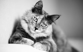 Picture eyes, cat, mustache, look, cute