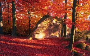 Picture the sun, trees, stones, Leaves