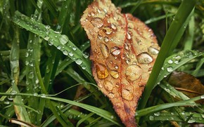 Wallpaper macro, sheet, leaves, fall, rain, autumn, drop, leaves, grass, mood, rain, grass, autumn, drops