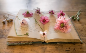 Picture flowers, background, Maki, book