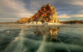 Wallpaper spring, the sun, ice, Baikal, lake, dog