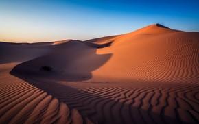 Picture desert, Abu Dhabi, UAE