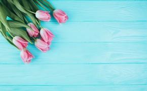Picture flowers, flowers, spring, tender, tulips, tulips, pink, wood, fresh, pink, beautiful