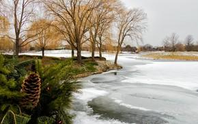 Wallpaper winter, ice, trees