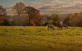 Picture field, autumn, landscape, horses, horse