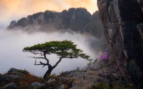 Wallpaper clouds, grass, landscape, Bush, rock, tree, pine, fog, mountains, flowers