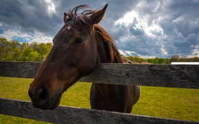 Picture nature, horse, the fence