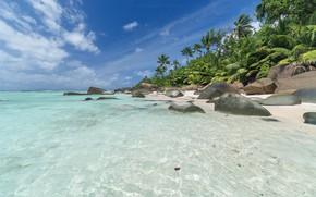 Picture sea, beach, tropics, palm trees, coast