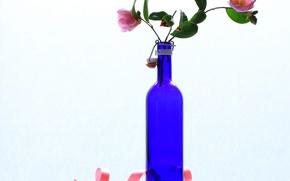 Wallpaper bottle, Camellia, still life, flowers