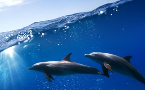 Picture sea, the sky, the sun, dolphins, under water
