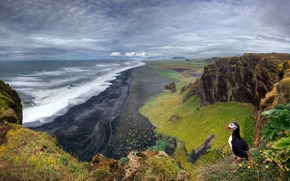 Wallpaper landscape, rocks, bird, Iceland, puffin, sea, beach, stalled