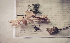 Picture letter, flowers, background