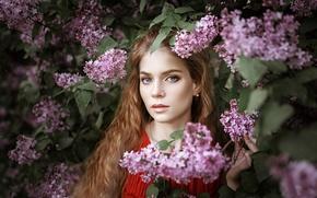 Picture portrait, the beauty, lilac, Anna Storozheva