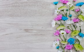 Picture flowers, colorful, white, chrysanthemum, wood, blue, pink, flowers
