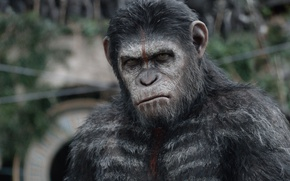 Picture cinema, movie, film, Cesar, War for the Planet of the Ape