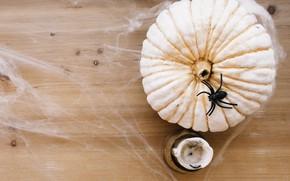 Picture holiday, web, spider, pumpkin, Halloween
