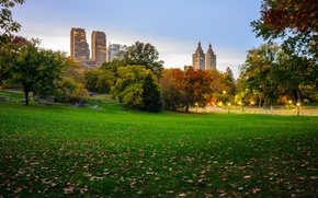Picture autumn, leaves, trees, New York, lights, USA, skyscrapers, lawn, Central Park