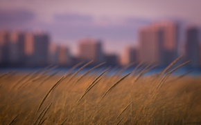 Picture grass, the city, focus, bokeh, rozmyte