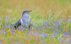 Picture grass, flowers, nature, bird, clearing
