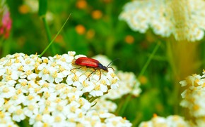 Picture Macro, Flowers, Flowers, Insect, Macro