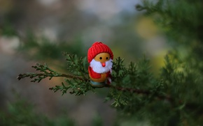 Picture holiday, toy, branch