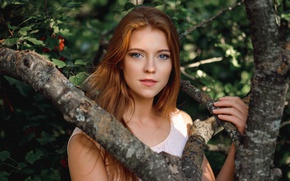 Picture look, branches, tree, garden, sponge, the beauty, redhead