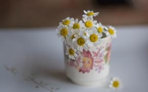 Picture chamomile, mug, a bunch, bokeh