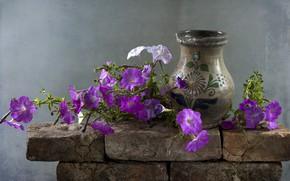 Picture flowers, vase, Petunia