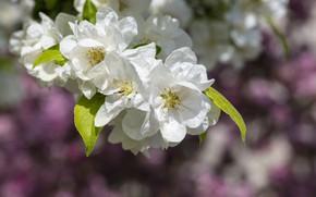Picture macro, branch, spring, flowering