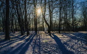 Picture winter, snow, trees, nature, Forest