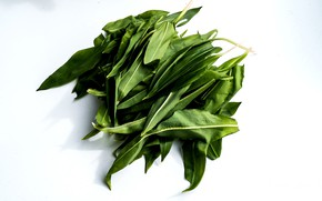 Picture leaves, background, Bear garlic