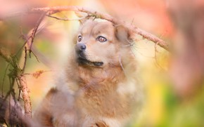 Picture dog, look, portrait, bokeh, branches, face