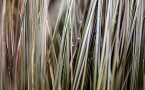 Picture grass, drops, macro, blur, grass