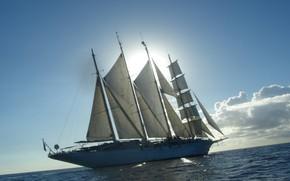 Picture sea, the sun, sailboat, sails, clipper