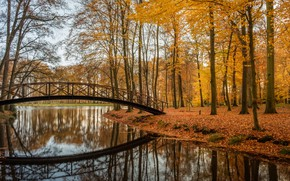 Wallpaper Park, reflection, bridge, trees, Brummen, Lifestyle, Brummen, Verstonden, Netherlands, Netherlands, lake, autumn
