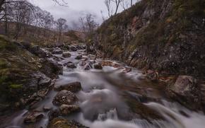 Picture trees, stream, stones