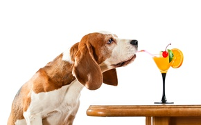 Picture table, dog, humor, cocktail, white background, tube