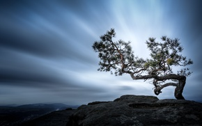 Picture tree, mountain, Germany, pine, The Elbe Sandstone mountains, Swiss Saxony
