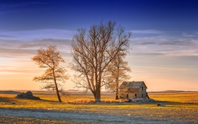 Picture light, house, tree, morning